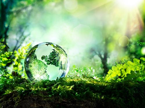 Bancali in legno: più attenzione per l'ambiente